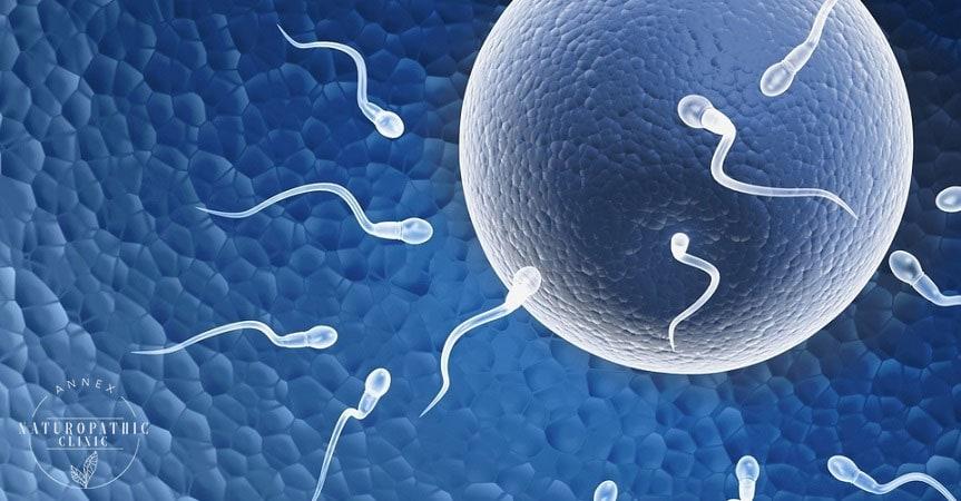 Optimizing Fertility | Annex Naturopathic Clinic | Toronto Naturopath
